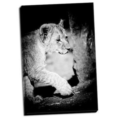 'Lion Cub II' Photographic Print on Wrapped Canvas A4989F318D8A4CD2B8D3909A77A67A8C