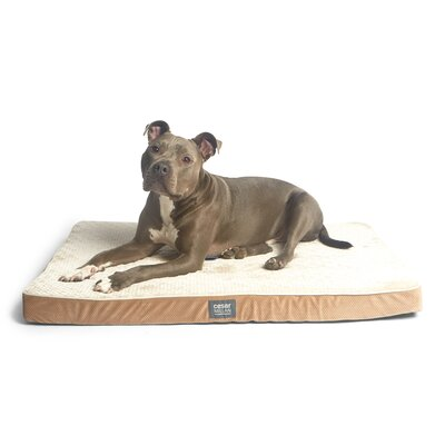 Cesar Millan Ortho Comfort Dog Mat Size: Large (42 W x 28 D x 3 H), Color: Brown