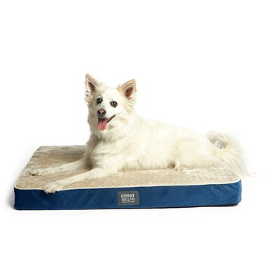 Cesar Millan Ortho Comfort Dog Mat Size: Medium (30 W x 21 D x 3 H), Color: Blue