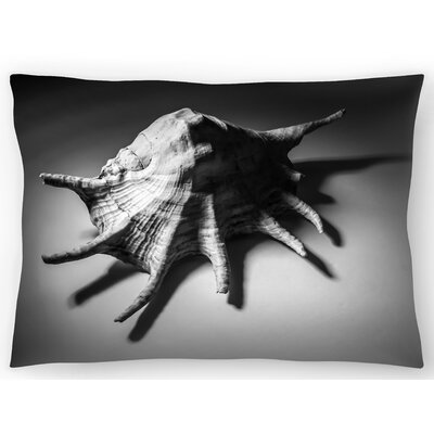 Shell Number 2 Lumbar Pillow Size: 14 x 20