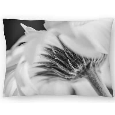 Daisy Vanillaice Lumbar Pillow Size: 14 x 20