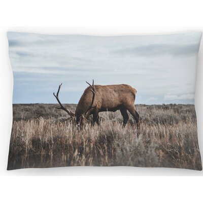 Wyoming Lumbar Pillow Size: 10 x 14