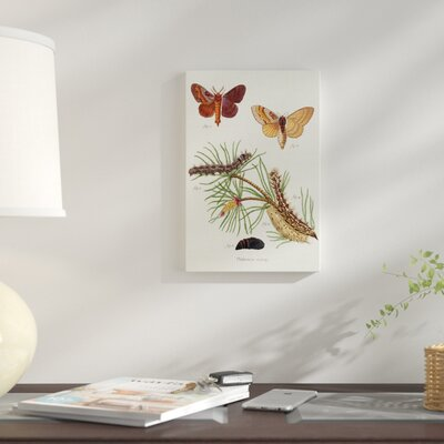 'Life Cycle of a Moth II' Print on Wrapped Canvas 9F89CF55C04A4004933F2057E36A5D5C