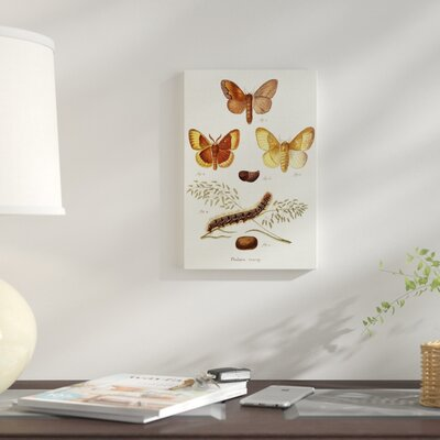 'Life Cycle of a Moth I' Print on Wrapped Canvas 53ED247AB05A4DAD9CEDFDD720931690
