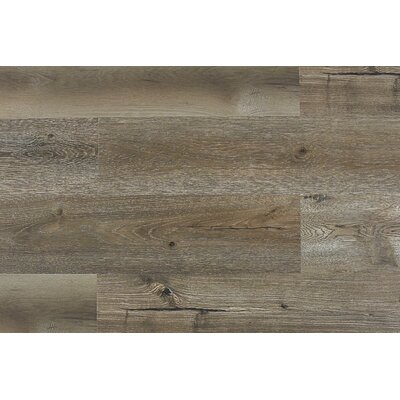Paradiso 8 x 71 x 12mm Laminate Flooring in Luccio