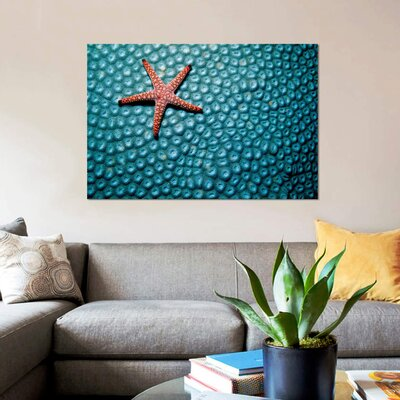 "'A Fromia Species Sea Star Grazing on a Sponge in the Indo-Pacific Ocean' Graphic Art Print on Canvas Size: 12"" H x 18"" W x 0.75"" D 7B5B7DA3D4B8459C8509373CB6B28AD5"