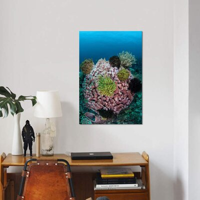 "'A Large Barrel Sponge Covered with Crinoids' Photographic Print Canvas Size: 12"" H x 8"" W x 0.75"" D 5E5A0EFD86EA473DAA320C57AA71CFBD"