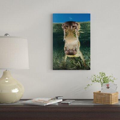 'American Saltwater Crocodile' Photographic Print on Canvas 2D8FF0C5DEF14E35A69D2E0FF6D0FD67