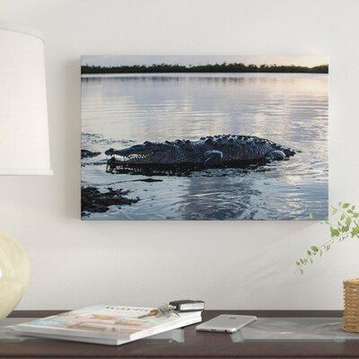 'A Large American Crocodile Surfaces' Photographic Print Canvas 35E6DF6E0DB64EBBA91DFD257E7DAFF7