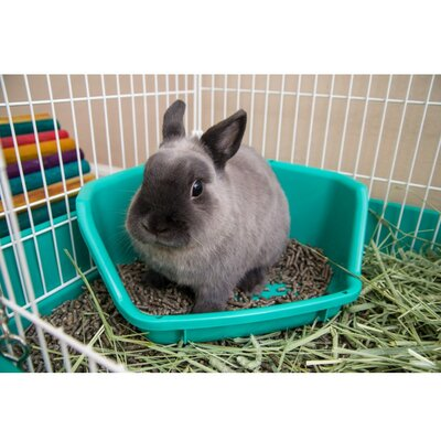 Rabbit Litter Pan