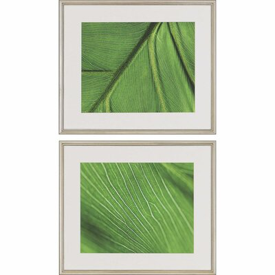 Palm Detail II by Lee 2 Piece Framed Photographic Print 1945