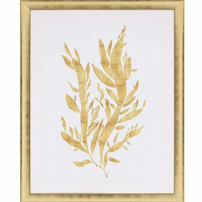 Sea Life IV by Miller Framed Graphic Art 3376