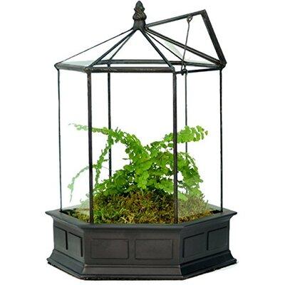 Resin Terrarium Planter WAR151