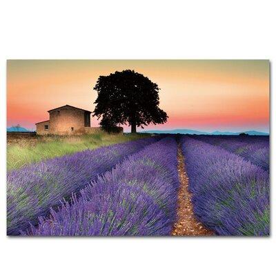 Lavender Field Wall Art