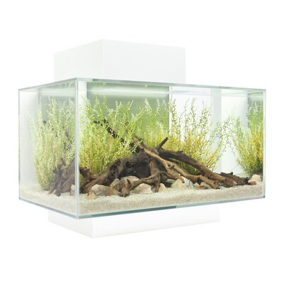 Bernie 6 Gallon Fluval Edge Aquarium Kit Color: White