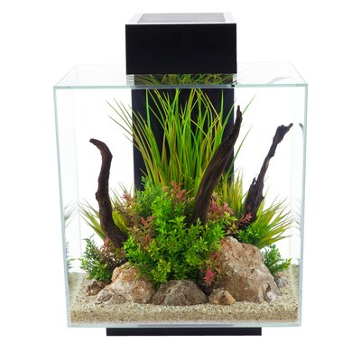 12 Gallon Fluval Edge Aquarium Kit Color: Black