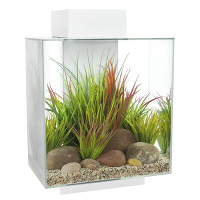 12 Gallon Fluval Edge Aquarium Kit Color: White