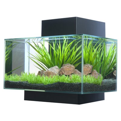 6 Gallon Fluval Edge Aquarium Kit Color: Black
