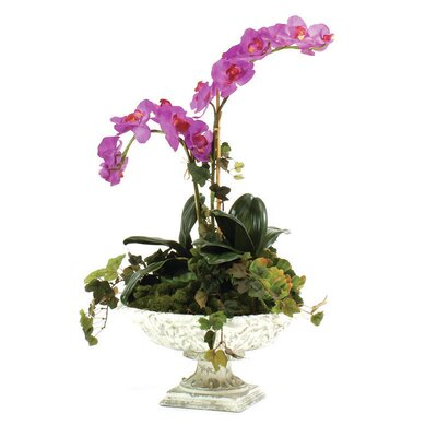 Fuschia Orchid in Urn image