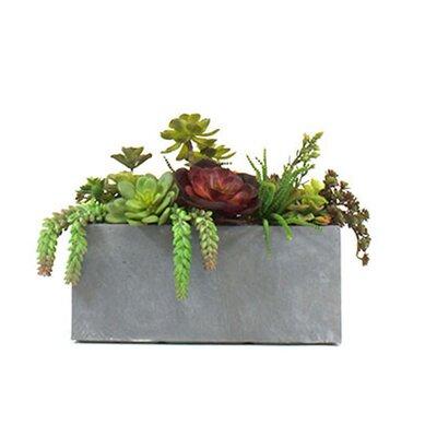 Succulent Garden in Clay Fibre Planter image
