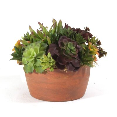 Succulent Garden in 8 Terracotta Planter
