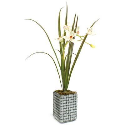 Orchid with Clay Planter