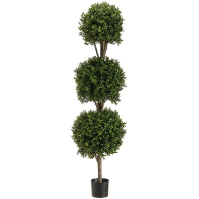 "Ball Floor Boxwood Topiary in Pot Size: 72"" H x 12"" W x 12"" D D1A04C2FA10A453492D7FFE8FCCD7926"