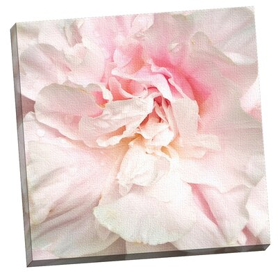 'Power Puff Peony' Photographic Print on Wrapped Canvas