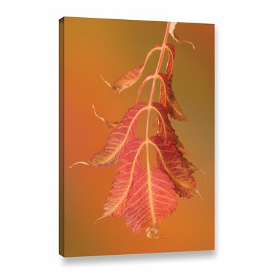 'Light in the Forest' Photographic Print on Wrapped Canvas Size: 12