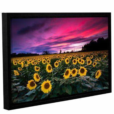 'Sunflower Sunset' Framed Photographic Print Size: 14