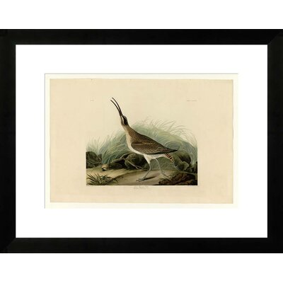 Great Esquimaux Curlew by John James Audubon Framed Graphic Art NE53343