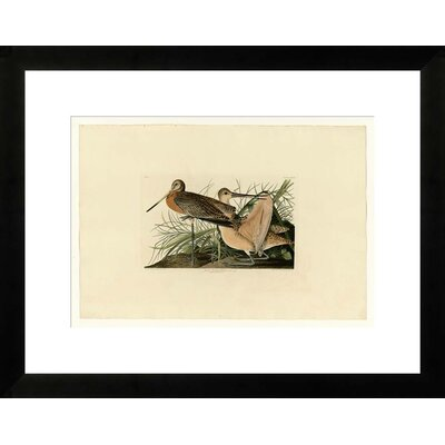Great Marbled Godwit by John James Audubon Framed Graphic Art NE53347