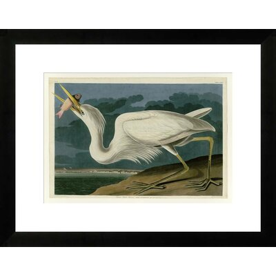 Great Heron by John James Audubon Framed Graphic Art NE53351