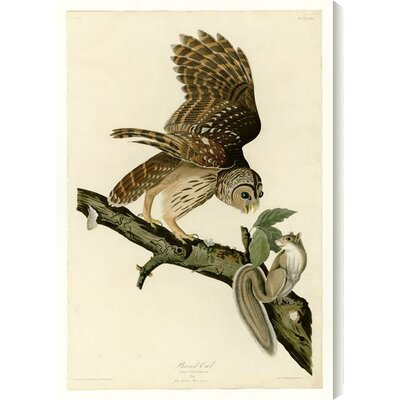 'Barred Owl' by John James Audubon Painting Print on Wrapped Canvas Size: 30