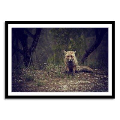 New Era Fox Vignette Framed Photographic Print NE82255