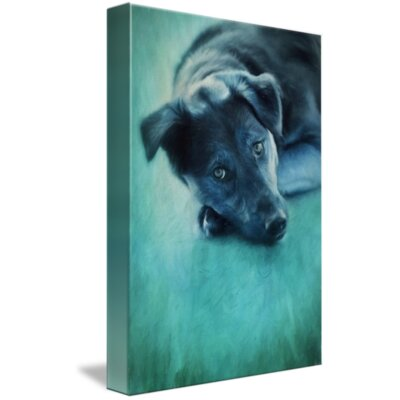 'Winter Dog' Photographic Print on Canvas Size: 16