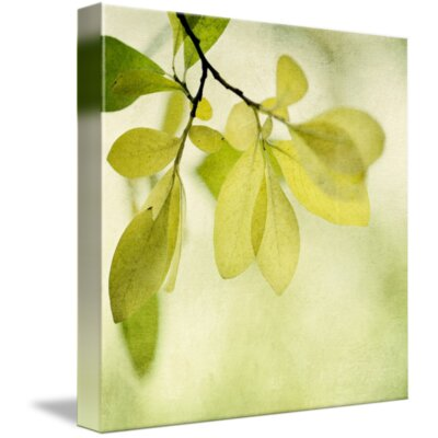 'Green Foliage Series' Photographic Print on Canvas Size: 11