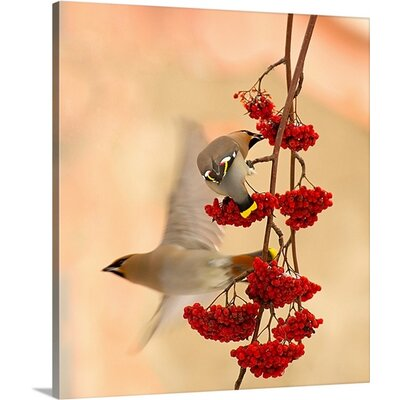 Waxwings by Dmitry Dubikovskiy Photographic Print on Canvas Size: 20