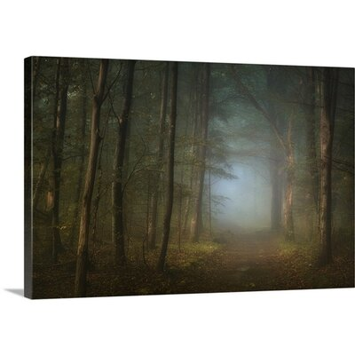 Forest Pathway by Norbert Maier Photographic Print on Canvas Size: 32