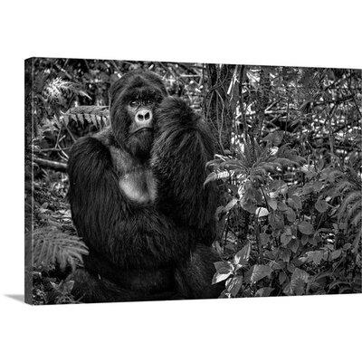 Kwitonda Silverback by Karen Lunney Photographic Print on Canvas Size: 16