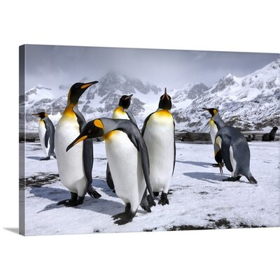 Kings at Right Whale Bay by Oliver Prince Photographic Print on Canvas Size: 24