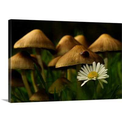 """Home of the Ladybird by Christian Rindom Photographic Print on Canvas Size: 16"""" H x 24"""" W x 1.5"""" D 2354943_1_24x16_none"""
