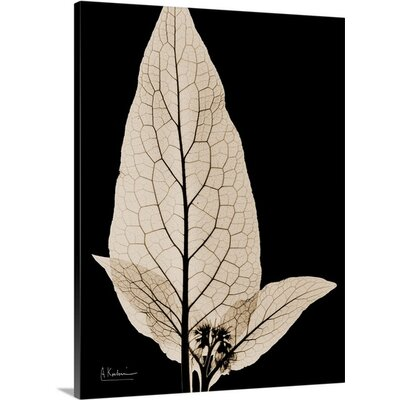Comfrey Leaf X-Ray by Albert Koetsier Photographic Print on Wrapped Canvas 1173117_1_18x24_none