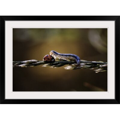 """'Love is Blindness by Fabien Bravin Photographic Print Format: Black Frame, Size: 17"""" H x 23"""" W x 1"""" D 2354951_15_18x12_none"""