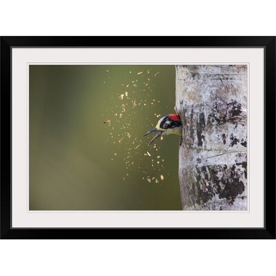 """'Spring Cleaning' by Olof Petterson Photographic Print Format: Black Frame, Size: 21"""" H x 29"""" W x 1"""" D 2355990_15_24x16_none"""