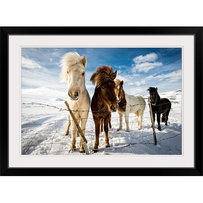 "'Icelandic Hair Style' by Mike Leske Photographic Print Format: Black Frame, Size: 29"" H x 41"" W x 1"" D 2357273_15_36x24_none"