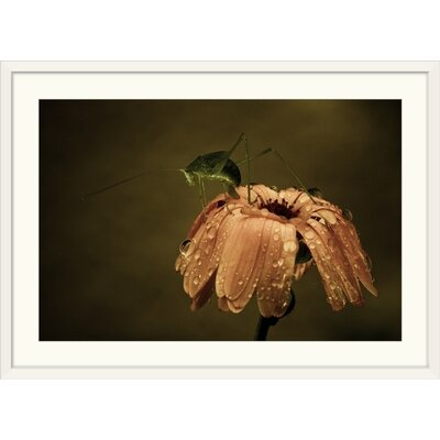 """'Still Life by Fabien Bravin Photographic Print Format: White Frame, Size: 17"""" H x 23"""" W x 1"""" D 2355216_21_18x12_none"""