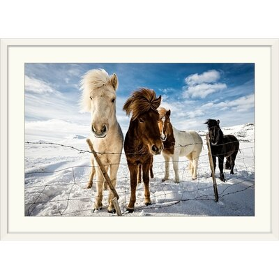 "'Icelandic Hair Style' by Mike Leske Photographic Print Format: White Frame, Size: 17"" H x 23"" W x 1"" D 2357273_21_18x12_none"