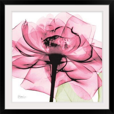 "'Rose X-Ray by Albert Koetsier Photographic Print Size: 35"" H x 35"" W x 1"" D, Format: Black Framed 1937225_15_30x30_none"