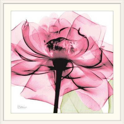 "'Rose X-Ray by Albert Koetsier Photographic Print Size: 29"" H x 29"" W x 1"" D, Format: White Framed 1937225_21_24x24_none"